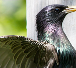 bird removal Arlington