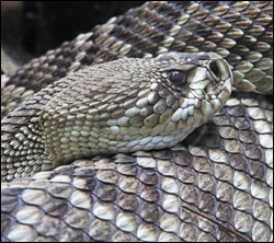 snake removal Arlington